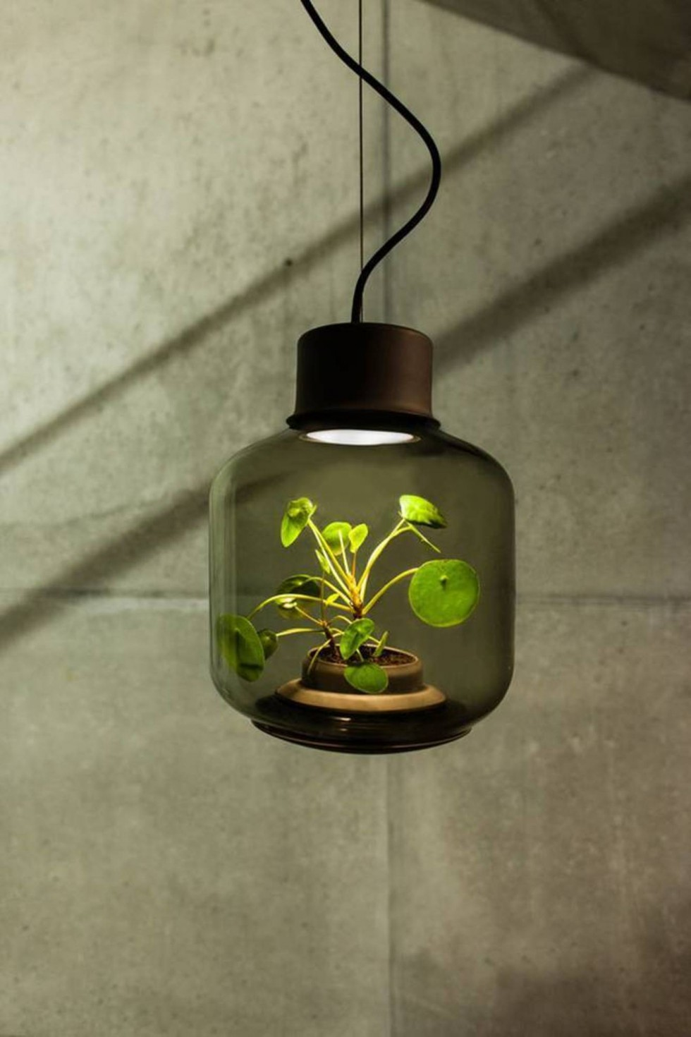 Find Terrarium Lamps by Nui Studio1 Nui Studio Find Terrarium Lamps by Nui Studio Find Terrarium Lamps by Nui Studio1 e1460363386819