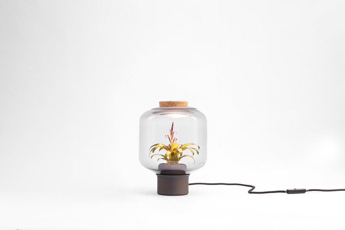 Find Terrarium Lamps by Nui Studio2 Nui Studio Find Terrarium Lamps by Nui Studio Find Terrarium Lamps by Nui Studio2