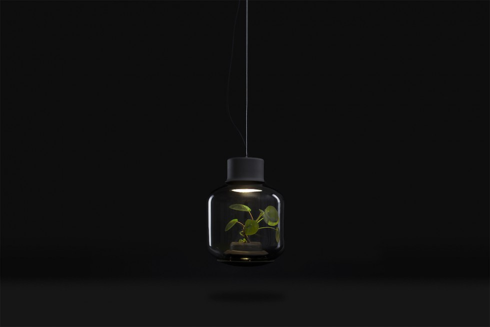 Find Terrarium Lamps by Nui Studio4 Nui Studio Find Terrarium Lamps by Nui Studio Find Terrarium Lamps by Nui Studio4 e1460363455337